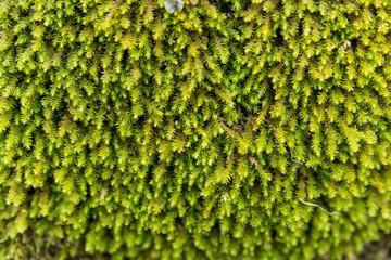 Beautiful moss background