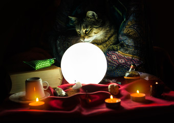 Cat in hand of fortune teller