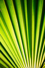 Tropic palm leaf in macro picture with abstract lines useful for background