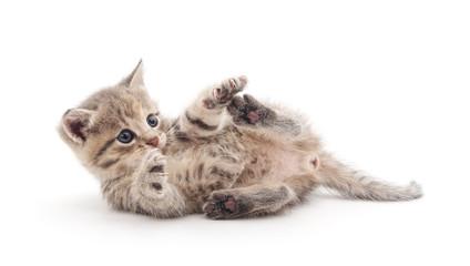 Playful kitten.