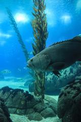 Fish in oceanarium in Lisbon Portugal