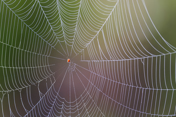 Irregular spider web