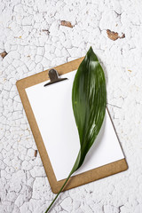 Clipboard with plant leaf