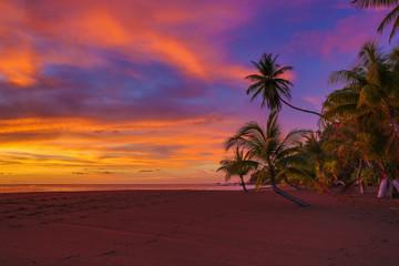 Vivid ocean sunset with clouds and palm trees