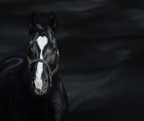 Portret czarny koń z kierowymi ocenami. Unigue i rzadkie kolorowe.