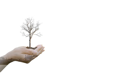 Double Exposure Ecology concept Human hands holding big plant tree pollution  with on blurred sunset background,World Environment Day
