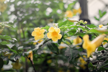 Yellow flower in the shape of a bell