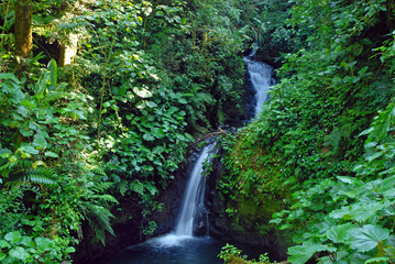 Waterfall in lush tropical rainforest in Costa Rica, where many plants grow that have uses in the pharmaceutical industry