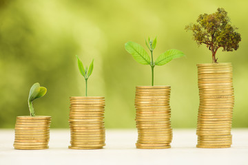 Business Finance and Money concept, Money Gold coin stack growing graph with green bokeh background Fototapete