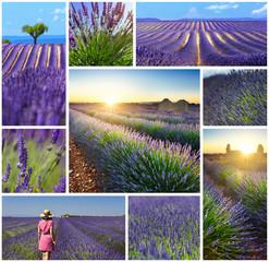 Lavender fields rectangular travel photo collage