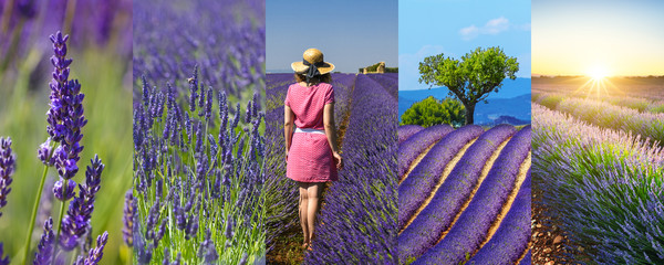 Lavender fields rectangular travel photo collage