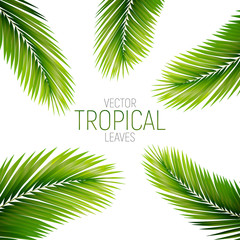 Tropical palm leaves. Vector exotic palm leaves
