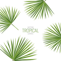 Tropical palm leaves. Vector exotic fan palm leaves