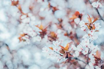 Blooming beautifully