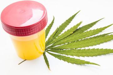 Cannabis or marijuana urine test. Laboratory urine container stands on green leaf of hemp on white background. The concept of laboratory testing for cannabis in urine or addiction of smoking marijuana