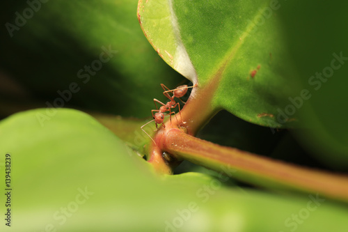 World Of Ant Ants Working Stock Photo And Royalty Free Images On
