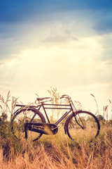 Landscape picture Vintage Bicycle with Summer grass field at sunset ; vintage filter style.classic bicycle,old bicycle style for greeting Cards ,post card