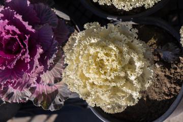 Flower pot with beautiful flowers in it