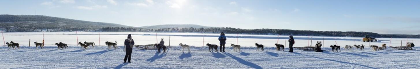 panoramic view to dogs before running
