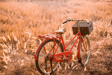 beautiful landscape image with Bicycle at summer grass field.classic bicycle,old bicycle style for greeting Cards ,post card