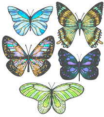 vector set of colorful hand-drawn butterflies