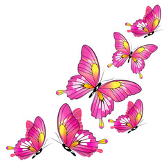 pink butterflies,watercolor, isolated on a white