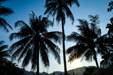 coconut palm trees in evening sun