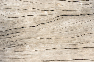 Texture wood oak older style, background wooden old dirty