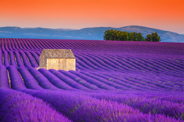 Spectacular lavender fields in Provence, Valensole, France, Europe
