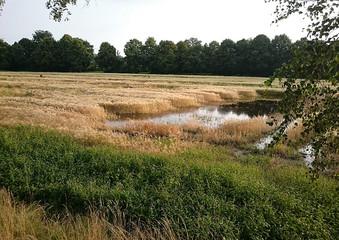 Überschwemmte Felder nach Hochwasser