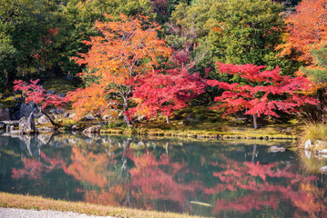 Wall Mural - Colorful Autumn Leaf Season japanese garden in Japan