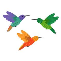Set three small colorful bird hummingbird