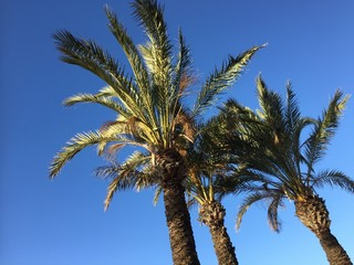 Palm tree leaves on a clear blue sky outdoors background