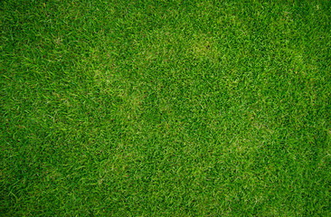 green grass natural background texture