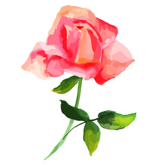 Vector and watercolor drawing of blooming red rose, abstract