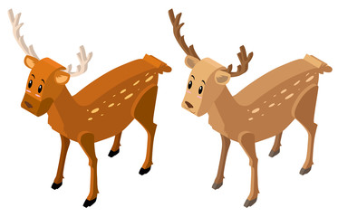 3D design for two deers