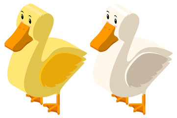 3D design for yellow and white ducks