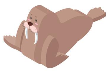 3D design for walrus
