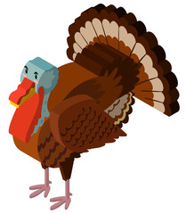 3D design for big turkey