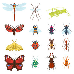 Colorful top view insects icons isolated on white wildlife wing detail summer worm and caterpillar bugs wild spider bee vector illustration.