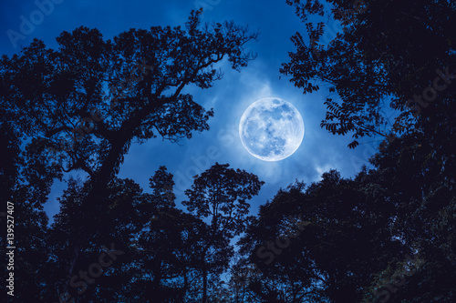 Wall mural Silhouette the branches of trees against blue sky with full moon.
