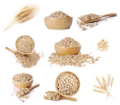 Ear of barley sets on white background.