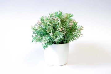 flowerpot with white background