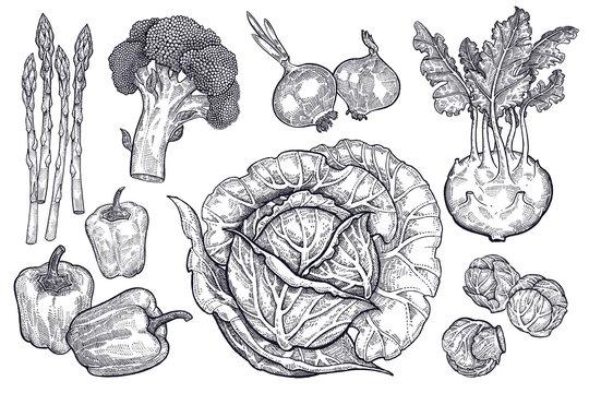 Vegetables set. Vintage graphics.