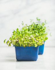 Fresh spring green live radish kress sprouts in blue plastic pots over white marble background for healthy eating, selective focus, copy space. Clean eating, dieting, detox food concept
