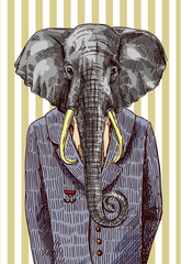 Elephant in Jacket