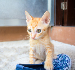 Small red kitten plays with shoe. Outdoor life of domestic cat