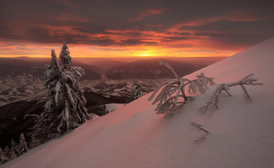 Snowy trees on background of amazing sunset in winter Carpathians