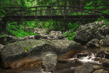 Natural Bridge Creek at Springbrook in Queensland.