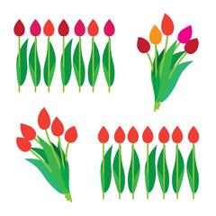 set of tulips bouquet